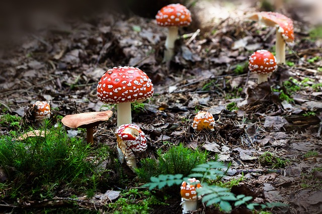 magic mushrooms: what you need to know
