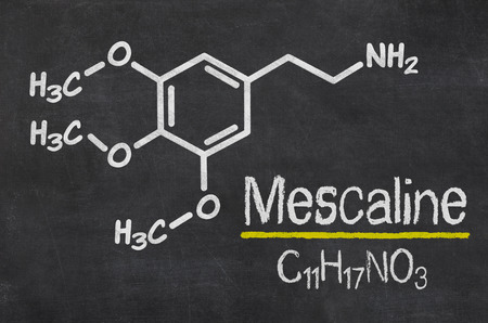 What are the differences between mescaline cacti