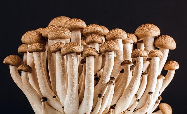 The advantage of a magic mushroom grow kit | Avalon Magic Plants
