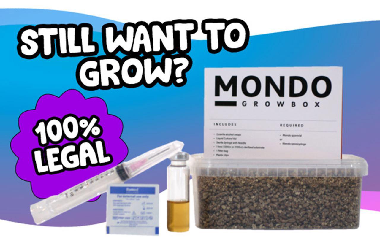 legal-mushroom-growkit (1)