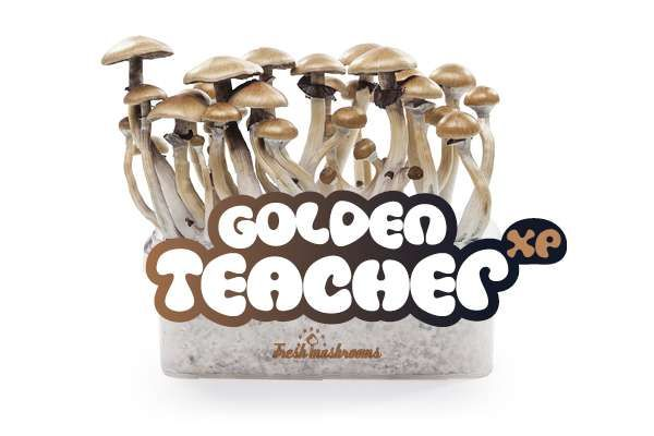 100% Mycelium Golden Teacher Mushroom Growkit | Avalon Magic Plants