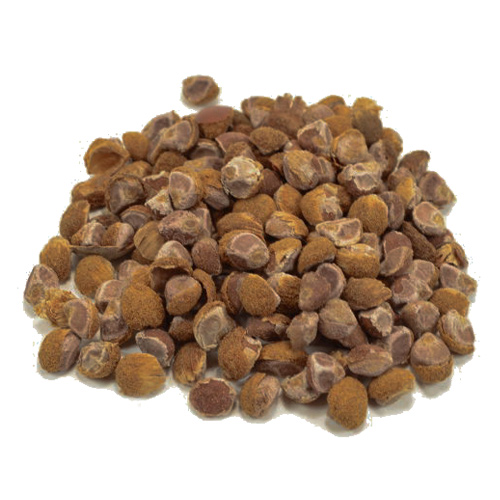 Argyreia nervosa BABY HAWAIIAN WOODROSE Seeds!