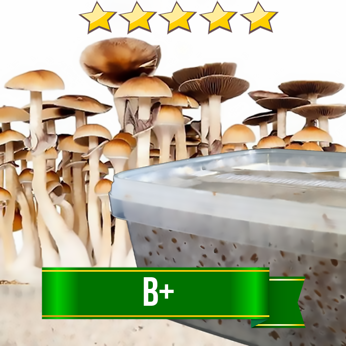 B+ Magic Mushroom Grow kit - 1200cc | Avalon Magic Plants