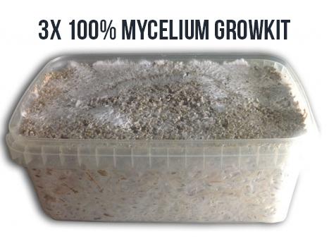 buying 100% mycelium medium grow kit | Avalon Magic Plants