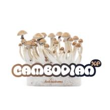 Freshmushrooms - magic mushroom grow kits | Avalonmagicplants