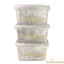 3x Mini grow kit | Freshmushrooms