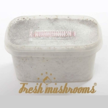 Pes Amazonian Mini | Freshmushrooms grow kit